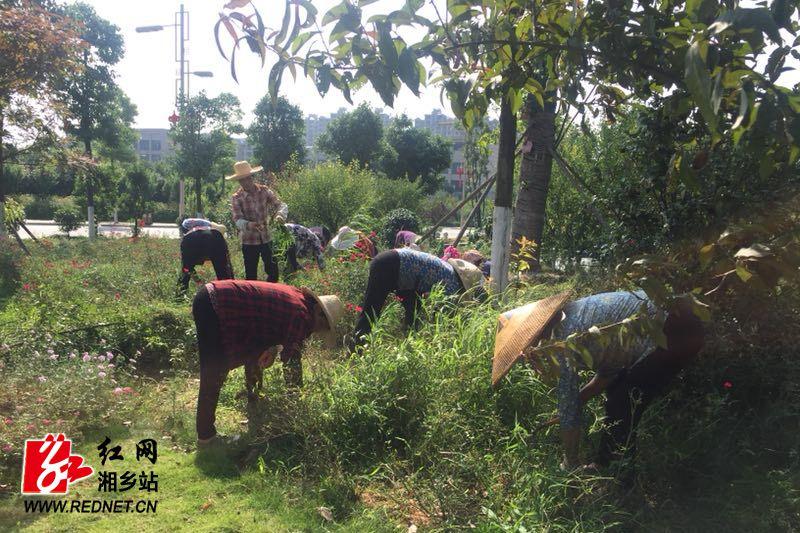 机关事务中心:修剪除草治虫 美化人民广场