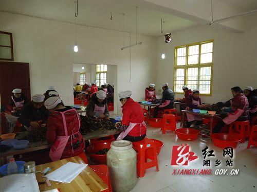梅桥镇/上峰槟榔厂工人们正在工作。