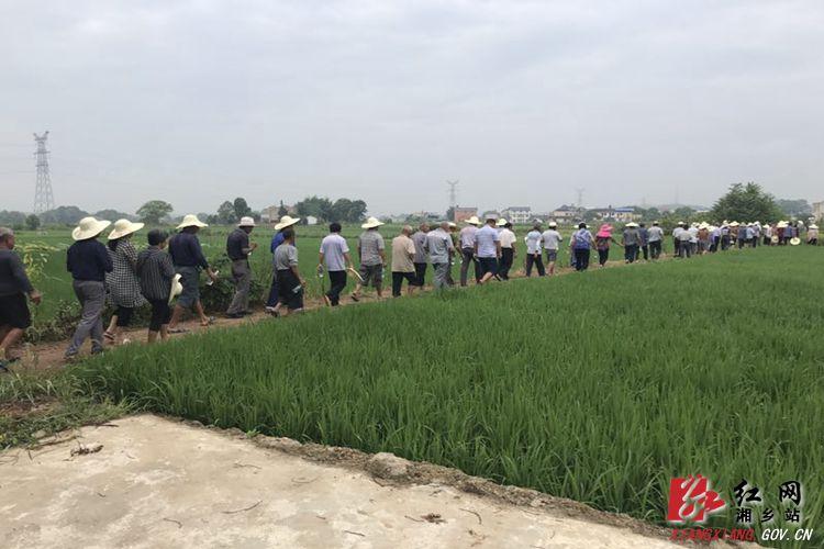 育塅乡:推广再生稻栽培技术 助农民增产增收