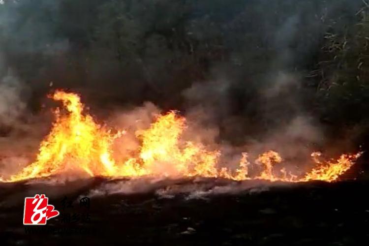 焚烧秸秆引发森林火灾 林业部门提醒安全过节