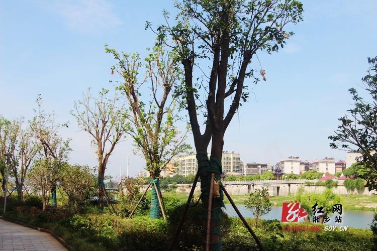 曾国藩诗文岛受灾树木换新绿