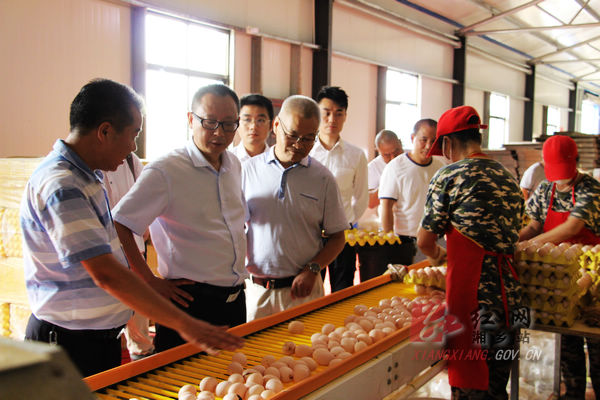 向敏来湘乡调研农业产业化项目情况