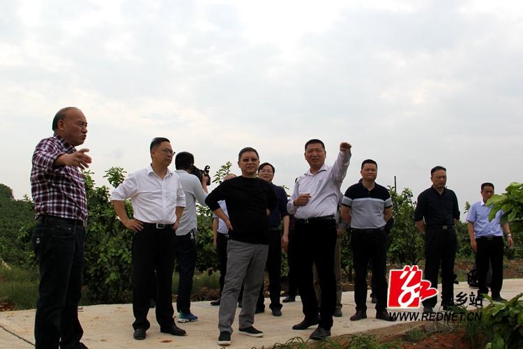 赵文彬来湘乡调研指导现代农业示范园建设